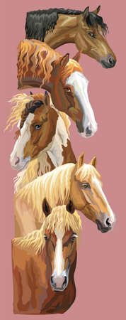 Vertical postcard with portraits of horses breeds (Russian Heavy Draft Horse; Byelorussian Harness Horse; Welsh Pony, Pinto Horse) isolated on pink background. Vector colorful illustration. Illustration