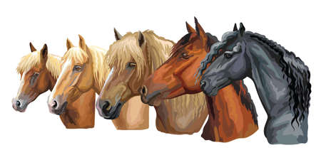 Set of colorful vector portraits of horses breeds looking in profile (Russian Heavy Draft Horse; Byelorussian Harness Horse; Friesian horse) isolated on white background