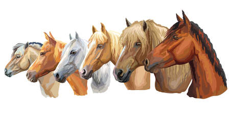 Set of colorful vector portraits of horses breeds looking in profile (Russian Heavy Draft Horse; Byelorussian Harness Horse; Orlov trotter horse) isolated on white background