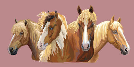 Set of colorful vector portraits of horses breeds (Russian Heavy Draft Horse; Byelorussian Harness Horse; Friesian horse) isolated on pink background