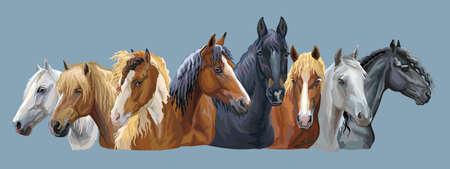 Set di ritratti vettoriali colorati di diverse razze di cavalli (cavallo da tiro pesante russo; cavallo da imbracatura bielorusso; cavallo frisone) isolato su sfondo grigio-blu Vettoriali