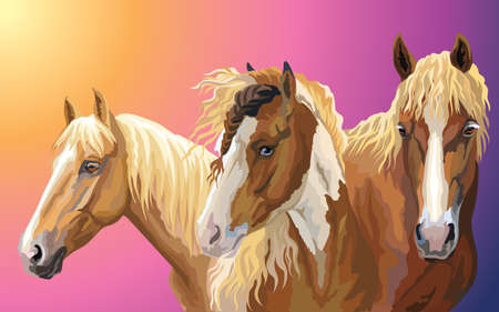 Set of colorful vector portraits of horses breeds ( Pinto Horse; Byelorussian Harness Horse; American Quarter horse) isolated on gradient background Illustration