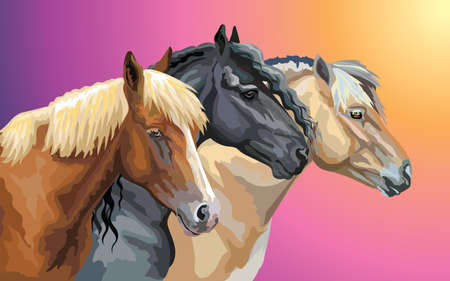 Set of colorful vector portraits of horses breeds (Norwegian Fjord Pony; Friesian horse, Byelorussian Harness Horse) isolated on gradient background