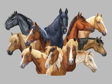 Zestaw kolorowych wektor portrety różnych ras koni (rosyjski ciężki koń zimnokrwisty; białoruski koń uprzęży; koń fryzyjski, kuc walijski) na białym tle na szarym tle Ilustracje wektorowe