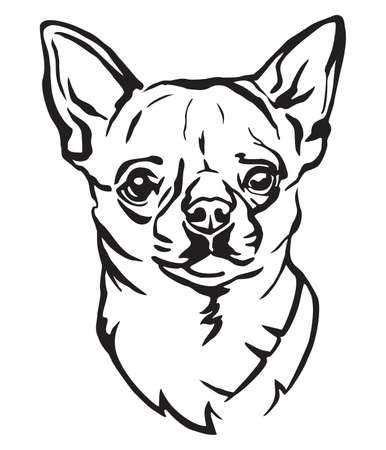 Decorative portrait of Dog Chihuahua, vector isolated illustration in black color on white background. Image for design and tattoo.