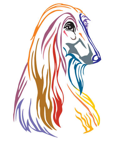 Colorful decorative portrait of Dog Afghan Hound, vector illustration in different colors isolated on white background. Image for design and tattoo.