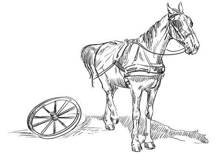 Vector hand drawing Illustration horse standing in profile in harness with wheel from carriage. Monochrome vector hand drawing sketch illustration in black color isolated on white background.