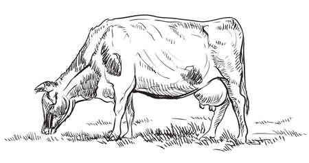 Main de vecteur dessin Illustration vache au pâturage debout dans le profil. Main de vecteur monochrome dessin illustration de croquis en couleur noire isolée sur fond blanc. Vecteurs