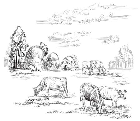 Vector hand drawing Illustration cows on pasture standing in profile. Rustic landscape. Monochrome vector hand drawing sketch illustration in black color isolated on white background.