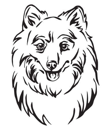 Decorative outline portrait of Dog Japanese Spitz, vector illustration in black color isolated on white background. Image for design and tattoo. Illustration