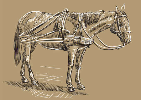 Vector hand drawing Illustration horse standing in profile. Monochrome vector hand drawing sketch illustration in black and white colors isolated on beige background.