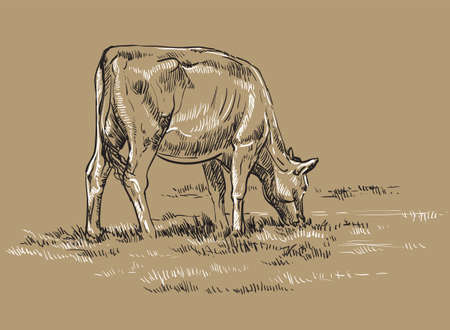 Vector hand drawing Illustration cow on pasture standing in profile. Monochrome vector hand drawing sketch illustration in black and white colors isolated on beige background. Illustration