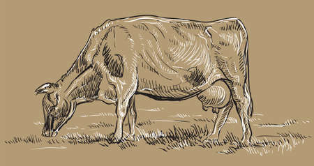 Vector hand drawing Illustration cow on pasture standing in profile. Monochrome vector hand drawing sketch illustration in black and white colors isolated on beige background.  イラスト・ベクター素材