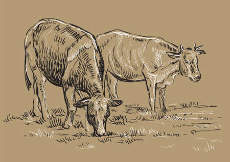 Vector hand drawing Illustration cows on pasture standing in profile. Monochrome vector hand drawing sketch illustration in black and white colors isolated on beige background.