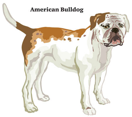 Decorative outline portrait of standing in profile dog American Bulldog, vector colorful illustration isolated on white background. Image for design.