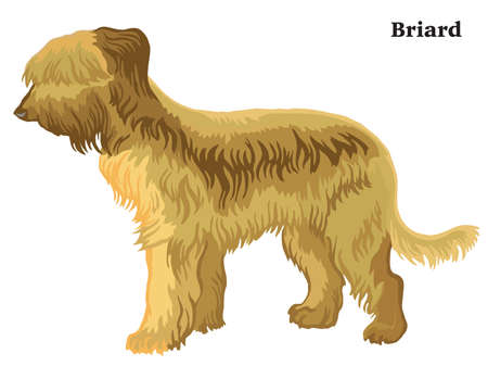 Decorative outline portrait of standing in profile dog Briard, vector colorful illustration isolated on white background. Image for design.