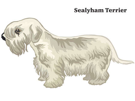 Decorative outline portrait of standing in profile dog Sealyham Terrier, vector colorful illustration isolated on white background. Image for design.