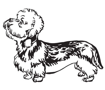Decorative outline monochrome portrait of standing in profile Dandie Dinmont Terrier Dog, vector isolated illustration in black color on white background