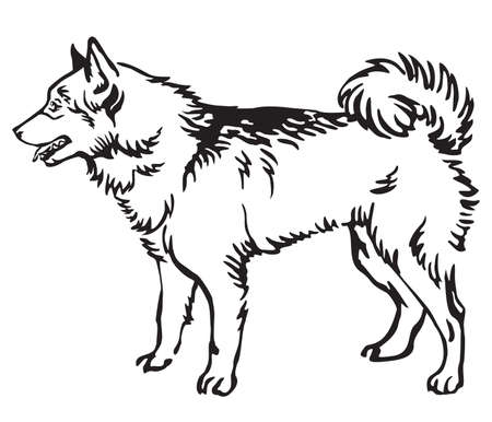 Decorative outline monochrome portrait of standing in profile Finnish Spitz Dog, vector isolated illustration in black color on white background