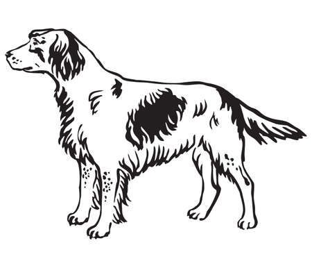 Decorative outline monochrome portrait of standing in profile Small Munsterlander Dog, vector isolated illustration in black color on white background