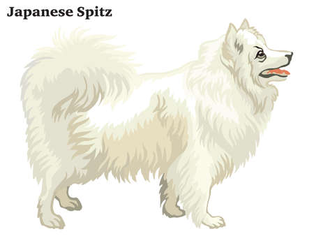 Decorative outline portrait of standing in profile dog Japanese Spitz, vector colorful illustration isolated on white background. Image for design.
