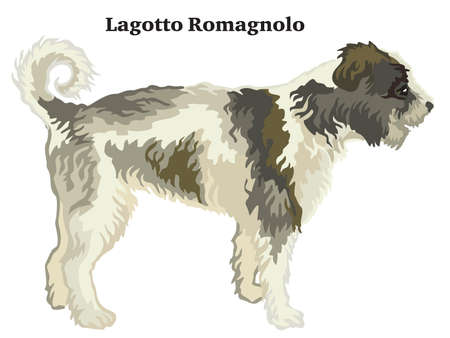 Decorative outline portrait of standing in profile dog  Lagotto Romagnolo, vector colorful illustration isolated on white background. Image for design. Foto de archivo - 119457578