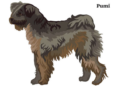 Decorative outline portrait of standing in profile dog  Pumi, vector colorful illustration isolated on white background. Image for design. Ilustração