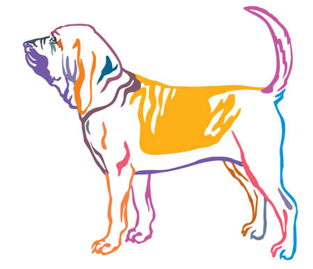 Colorful contour decorative portrait of standing in profile Bloodhound Dog, vector isolated illustration on white background Illustration