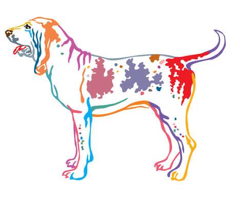 Colorful contour decorative portrait of standing in profile Bracco Italiano Dog, vector isolated illustration on white background