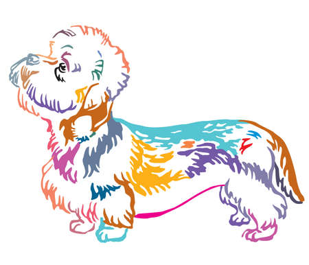 Colorful contour decorative portrait of standing in profile Dandie Dinmont Terrier Dog, vector isolated illustration on white background Illustration