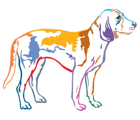 Colorful contour decorative portrait of standing in profile Estonian Hound Dog, vector isolated illustration on white background Illustration