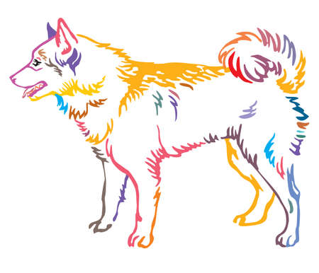 Colorful contour decorative portrait of standing in profile  Finnish Spitz Dog, vector isolated illustration on white background Ilustração