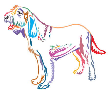 Colorful contour decorative portrait of standing in profile Spinone Italiano Dog, vector isolated illustration on white background