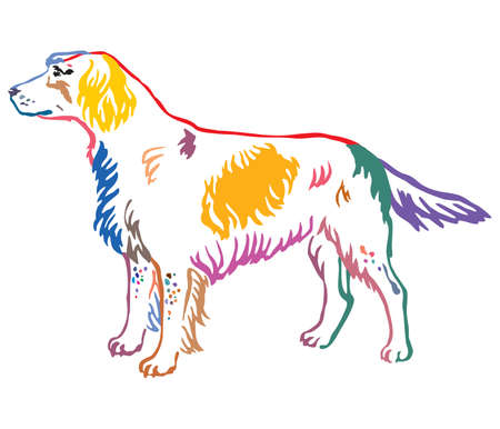 Colorful contour decorative portrait of standing in profile Small Munsterlander Dog, vector isolated illustration on white background