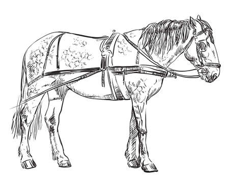 Vector hand drawing Illustration horse standing in profile. Monochrome vector hand drawing sketch illustration in black color isolated on white background.