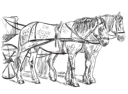 2650 Horse Bridle Stock Illustrations Cliparts And Royalty Free