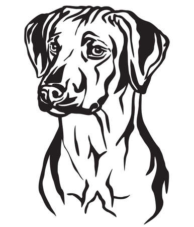 Decorative outline portrait of Rhodesian Ridgeback Dog looking in profile, vector illustration in black color isolated on white background. Image for design and tattoo. Reklamní fotografie - 124227107