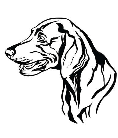 Decorative outline portrait of Weimaraner Dog looking in profile, vector illustration in black color isolated on white background. Image for design and tattoo.