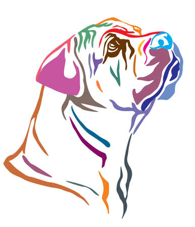 Colorful decorative outline portrait of Boerboel Dog looking in profile, vector illustration in different colors isolated on white background. Image for design and tattoo. Illustration