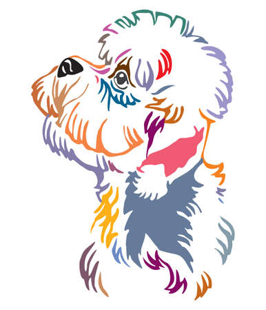 Colorful decorative outline portrait of Dandie Dinmont Terrier Dog looking in profile, vector illustration in different colors isolated on white background. Image for design and tattoo.