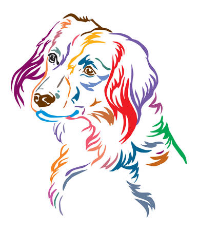 Colorful decorative outline portrait of Nederlandse Kooikerhondje Dog looking in profile, vector illustration in different colors isolated on white background. Image for design and tattoo.