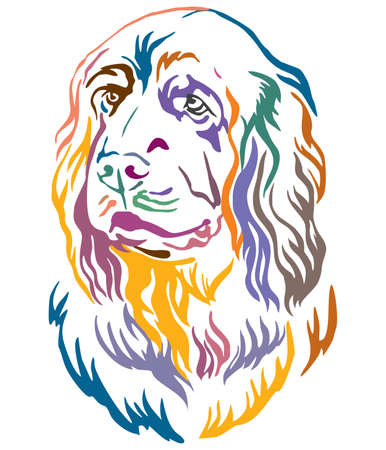 Colorful decorative outline portrait of Sussex Spaniel Dog looking in profile, vector illustration in different colors isolated on white background. Image for design and tattoo.