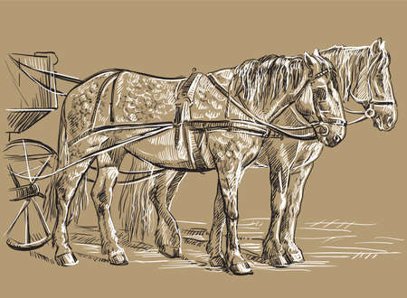 Vector hand drawing Illustration two horses in harness standing in profile. Monochrome vector hand drawing sketch illustration in black and white colors isolated on beige background.