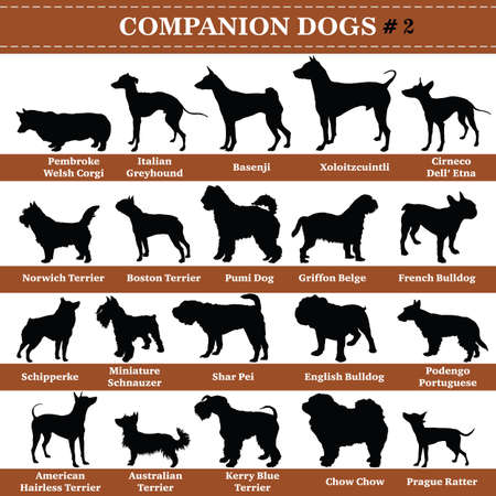 Set of 20 companion dogs. Vector set of companion breeds dogs standing in profile. Isolated dogs breed silhouettes set in black color on white background. Part 2