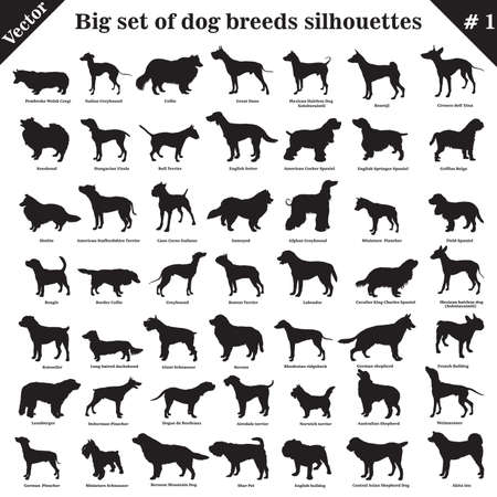 Big set of 49 different dogs, hounds, working, shepherd, terrier, companion, hunting. Vector set of different  dogs standing in profile. Isolated dogs breed silhouettes set in black color on white background. Vettoriali
