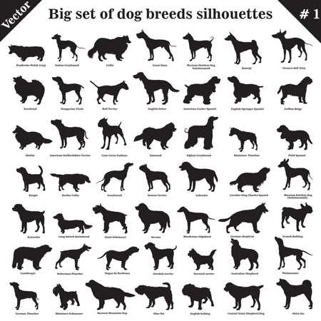 Gran conjunto de 49 perros diferentes, sabuesos, de trabajo, pastor, terrier, compañero, caza. Conjunto de vector de diferentes perros en perfil. Los perros aislados crían siluetas en color negro sobre fondo blanco.