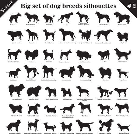 Big set of 49 different dogs, hounds, working, shepherd, terrier, companion, hunting. Vector set of different  dogs standing in profile. Isolated dogs breed silhouettes set in black color on white background. Part 2