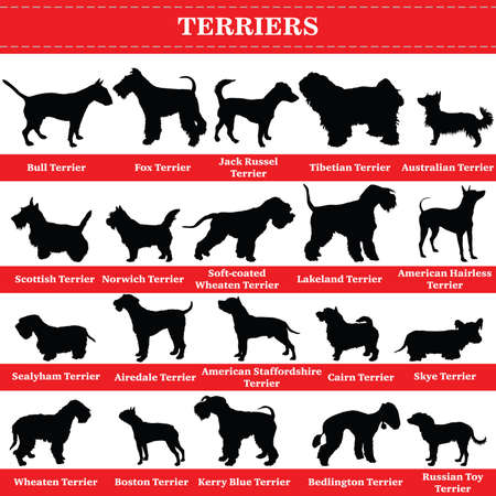 Set of 20 terrier dogs. Vector set of terrier breeds dogs standing in profile. Isolated dogs breed silhouettes set in black color on white background. Ilustracja