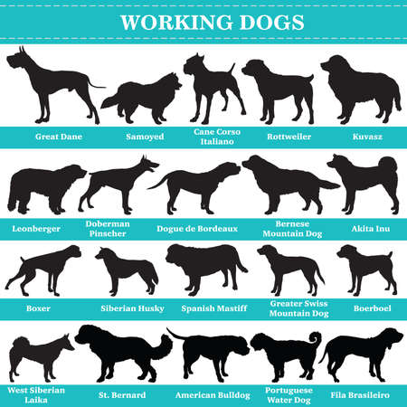Set of 20 working dogs. Vector set of hounds breeds dogs standing in profile. Isolated dogs breed silhouettes set in black color on white background.