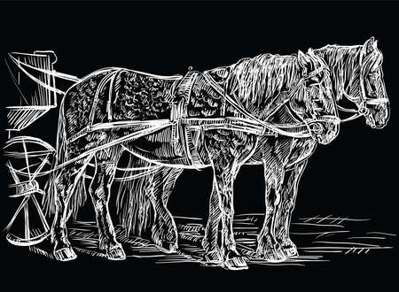 Vector hand drawing Illustration horses standing in profile. Monochrome vector hand drawing sketch illustration in white color isolated on black background. Illustration